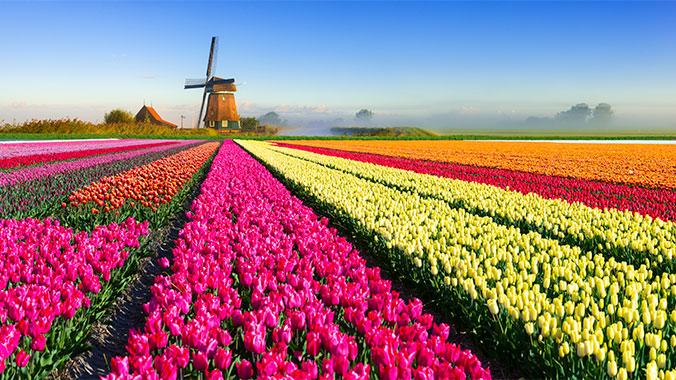 Страна мельниц и тюльпанов