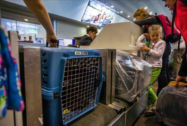 Забирать ли багаж при покупке 2 отдельных авиабилетов