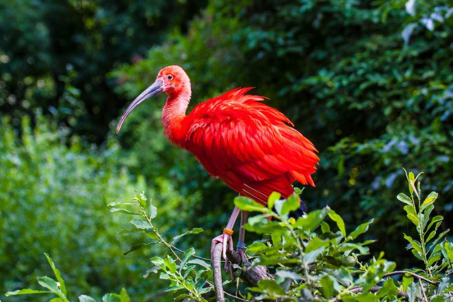 В Суринаме открыто несколько природных заповедников и национальных парков, самым популярным у отдыхающих остается заповедник Галиби