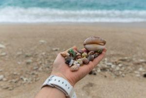 Камушки и ракушки с пляжей не стоит брать с собой на родину