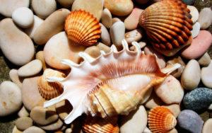 Кораллы и морские раковины