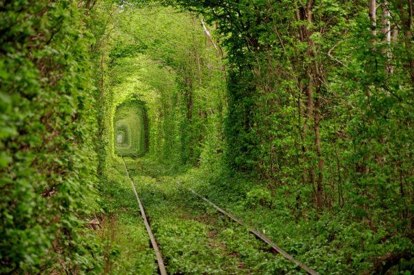 Недалеко от поселка Клевань, что в Ровенской области, расположено чрезвычайно романтическое место в Украине – тоннель любви