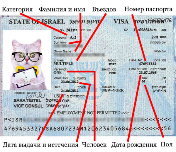 Как выглядит студенческая виза