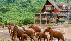 Национальный парк Абердаре, Кения