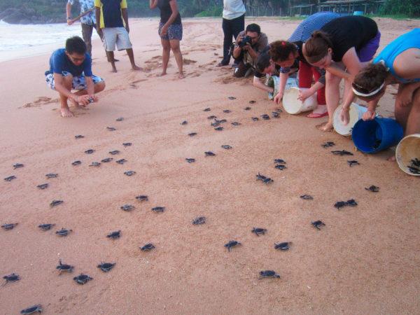 Помощь в сохранении популяции морских черепах