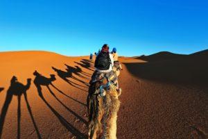 Путешествие на верблюдах по Марокко