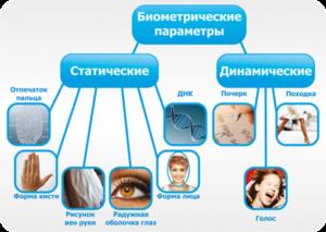 Типы и виды биометрических параметров