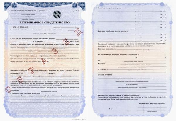 Это ветеринарное свидетельство потом будет обменено в пункте ветеринарного контроля аэропорта на ветеринарный сертификат
