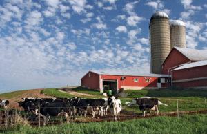 Канадская ферма