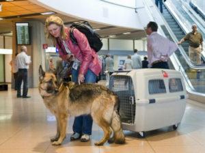 По поводу перевозки домашнего животного нужно узнать заранее