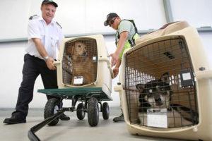 Ветеринарный контроль животных и растений