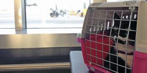 Перевозка животного в самолете в Австрию