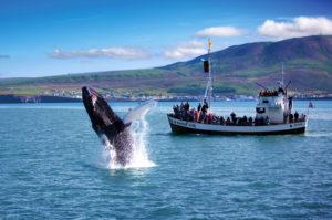 Китовый фьорд