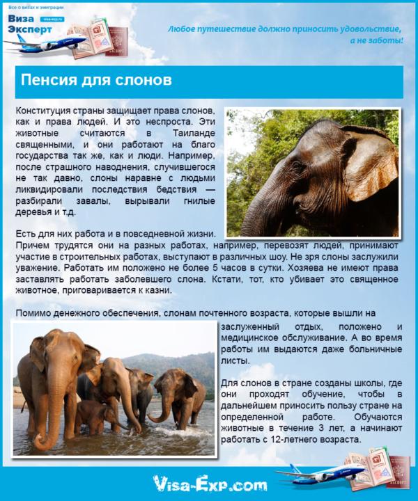 Пенсия для слонов