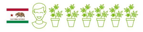 Все началось в 1996 году, когда в Калифорнии разрешили использовать лечебную марихуану