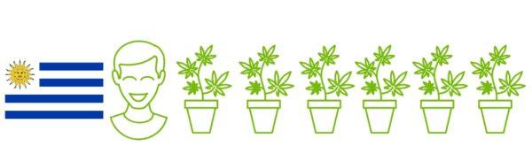 Уругвай - первая страна, легализовавшая марихуану
