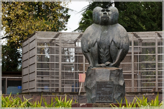 Обезьяний питомник в Сухуме – это база научно-исследовательского института экспериментальной патологии и терапии Академии наук Абхазии (основан в 1927 году), в котором проводятся исследования на приматах для создания вакцин