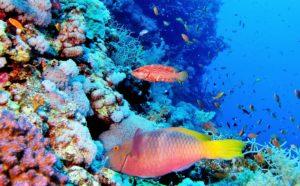 Подводный мир Израиля