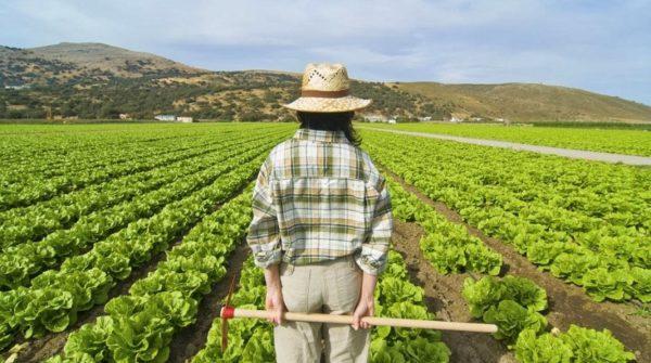 Сельское хозяйство в Испании переживает не лучшие времена